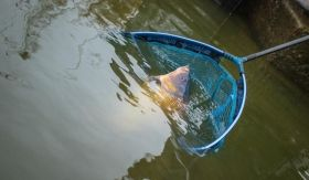 Глава за кеп Preston Latex Carp Landing Net